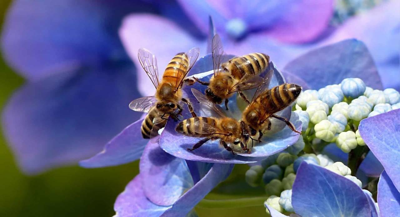 Honey: The Sweet (and the Bittersweet) Facts